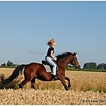 Pferd-und-Mensch