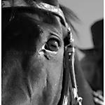 Pferd-Mensch-SW-Sepia