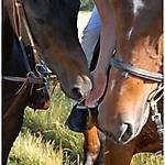 Pferd_Mensch_15