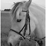 Pony_Mensch_SW_Sepia_5