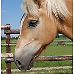 Pony_Mensch_10