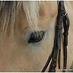 Pony_Mensch_19