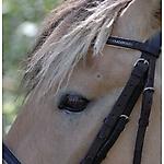Pony_Mensch_1