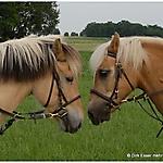 Pony_Mensch_24