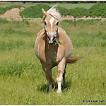 Pony_Mensch_5