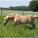 Pony_Mensch_6