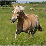 Pony_Mensch_7