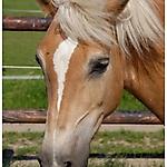 Pony_Mensch_9